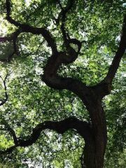 Peruo_Tree to theRight_photo